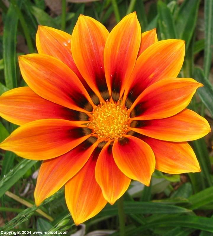 flower_picture_2.jpg